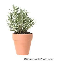 erva, pote, plantado, alecrim, argila