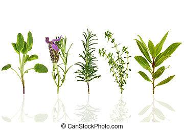 erva, seleção, folha