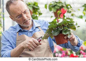 ervaren, senior, winkelbediende, op, het centrum van de tuin
