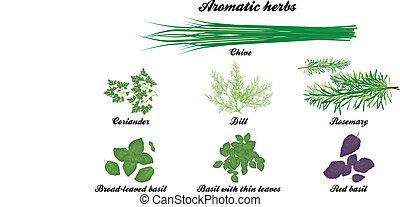 ervas, aromático, cartaz