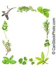 ervas, aromático, fresco