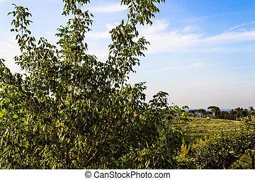 ervas daninhas, ligado, verde, vista