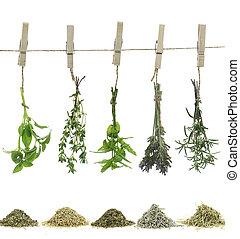 ervas frescas, pendurar, um, corda