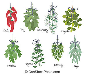 ervas, medicinal, aromático, grupos
