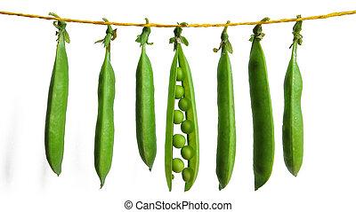 ervilhas, corda, experiência verde, penduradas, branca, cadeias
