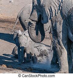 erwachsener, elefant, back., closeup, afrikanisch, baby