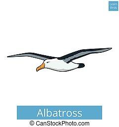 erzieherisch, albatros, spiel, vektor, lernen, vögel