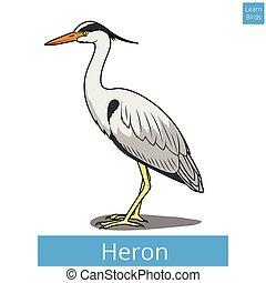 erzieherisch, reiher, spiel, vektor, lernen, vögel