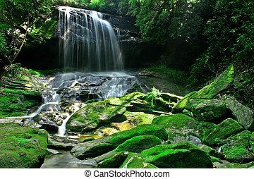esőerdő, vízesés