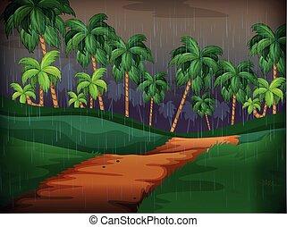 esős, színhely, erdő, nap
