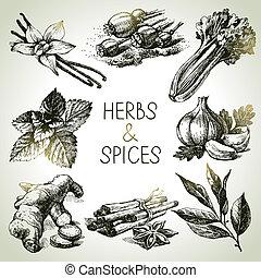 esboço, ícones, mão, ervas, desenhado, spices., cozinha