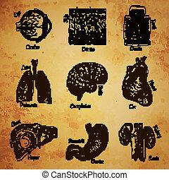 esboço, órgãos, human