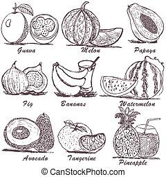 esboço, 2, fruta
