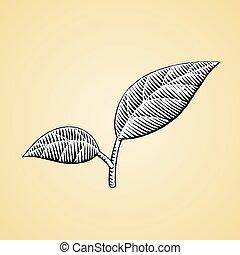 esboço, branca, preencher, folhas, tinta