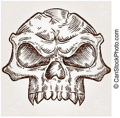 esboço, desenho, cranio
