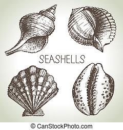 esboço, elementos, set., mão, desenho, seashells, desenhado