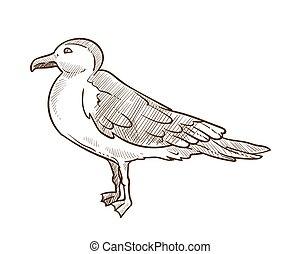 esboço, esboço, branca, ilustração, vetorial, monocromático, gaivota, pássaro