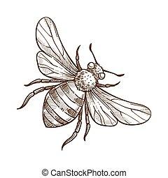 esboço, esboço, bumblebee, ilustração, inseto, vetorial, monocromático, branca