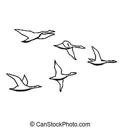 esboço, esboço, drawing., ilustração, mão, outono, experiência., vetorial, pretas, flock., monocromático, pássaro branco