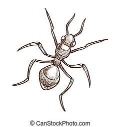 esboço, esboço, ilustração, formiga, vetorial, closeup, monocromático, branca
