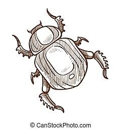 esboço, esboço, ilustração, inseto, vetorial, besouro, monocromático, branca