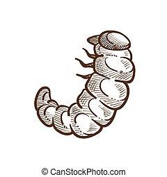 esboço, esboço, larva, ilustração, inseto prejudicial, vetorial, monocromático