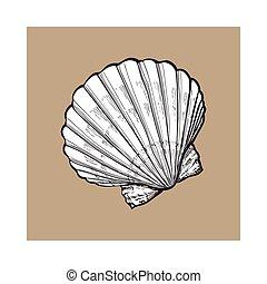 Esboço, estilo, Ilustração, isolado, vieira, vetorial,  saltwater, mar, concha, branca