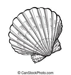esboço, estilo, ilustração, isolado, vieira, vetorial, saltwater, escudo mar