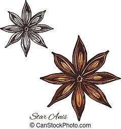 esboço, estrela, badian, anis, semente fruta, tempero