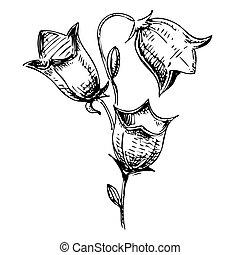 esboço, flor, ilustração, sino