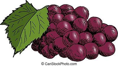 esboço, folha, illustration., vindima, mão, cacho, vetorial, desenhado, uva