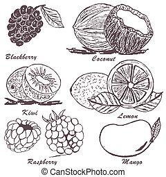 esboço, fruta, 3