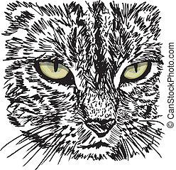 esboço, ground., pequeno, ilustração, gato, olhar, vetorial...