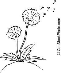 esboço, illustration., dandelion., vetorial, pretas, esboço