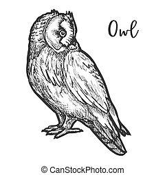 esboço, ou, burrowing, mão, coruja, pássaro, vetorial, ...