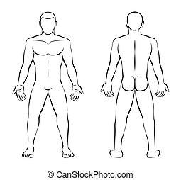esboço, pelado, costas, ilustração, vista dianteira, homem