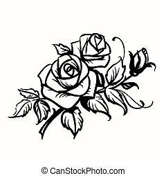 esboço, roses., fundo, pretas, branca, desenho