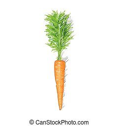 esboço, sobre, isolado, cenoura, fundo, branca, desenho