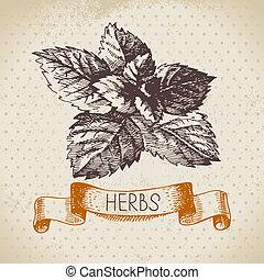 esboço, vindima, mão, ervas, fundo, desenhado, hortelã, ...