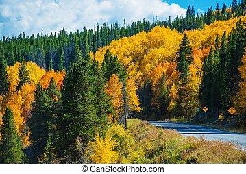 escénico, otoño, colorado, camino