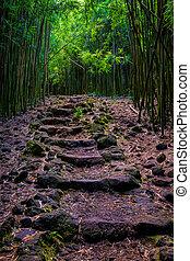 escabroso, trayectoria, bosque, maui, bambú, paisaje, vista