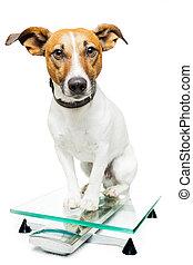 escala, perro