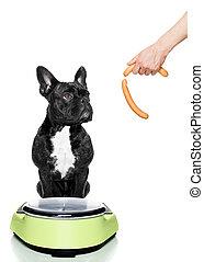 escala, sobrepeso, perro
