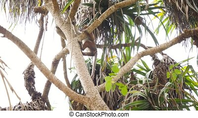 escalade, pendre, branche, arbre, métrage, sauvage, 4k, ...
