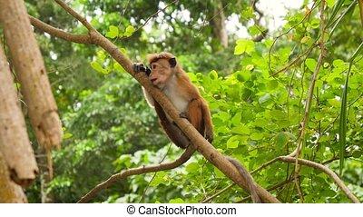 escalade, rainforest, vidéo, manger, arbre, sauvage, 4k, ...