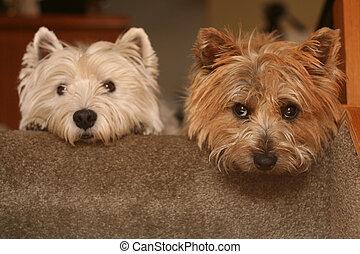 escalier, chiens