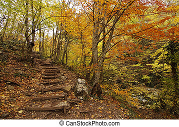 escalier, forêt automne, colline