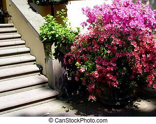 escalier, jardin