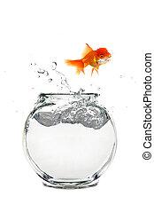 Escaping Goldfish