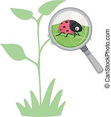 escarabajo dama, planta, beneficioso, bicho, ilustración